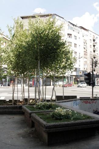 Zasađene breze, Dečanska ulica