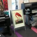 Promocija HP Designjet štampača velikog formata