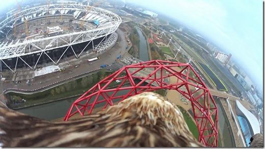 Eagle_Olympic Park_Action Cam