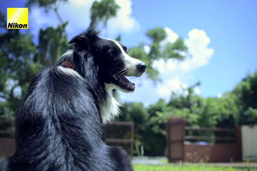 dog-takes-photos-heart-rate-monitor-phodographer-heartography-nikon-15