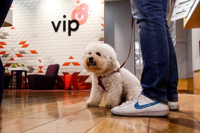 Pet_friendly_Vip_mobile_01